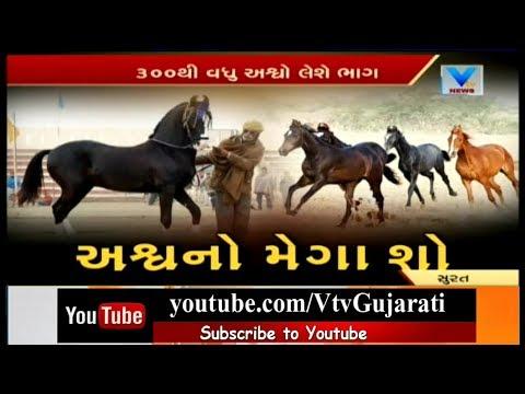Surat: Mega Horse Show organised at Batha Village; Gypsy Breed Tiger Horse Favorite | Vtv News