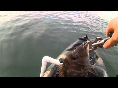 Kayak Fishing Wellington Point 1/11/15