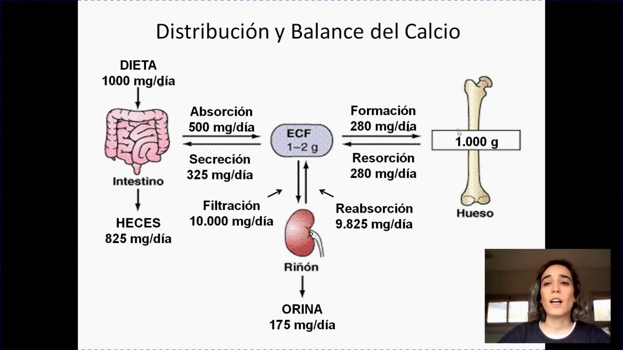 Metabolismo mineral y fisiologia osea - YouTube