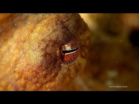 Diving the Salish Sea - Summer 2016