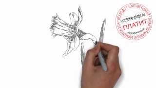 Как нарисовать лилию карандашом поэтапно(Как нарисовать дружную семью поэтапно карандашом за короткий промежуток времени. Видео рассказывает о..., 2014-07-02T05:41:00.000Z)