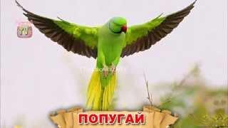 Изучаем слова. Птицы. Обучающее видео для детей.