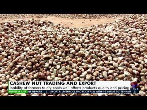 Cashew Nut Trading and Export - Business Live on JoyNews 29 Jan 2021