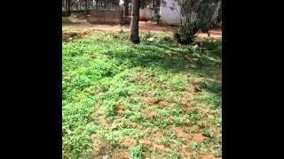 100 Acres - Farm Land - Gauribidanur - Chikballapur district - Karnataka