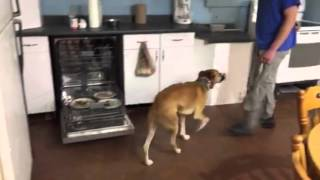 Dishwasher Surfing, How To Dog Training