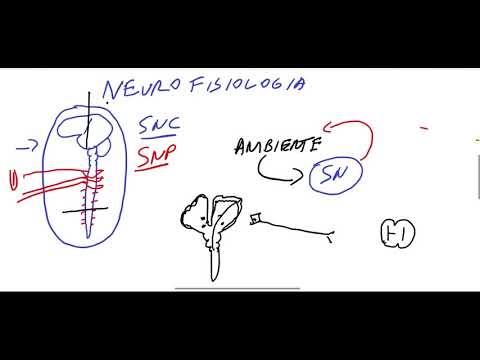 INTRODUÇÃO À NEUROFISIOLOGIA