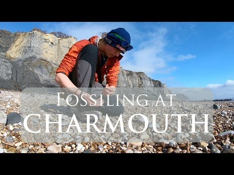 Fossiling At Charmouth Beach