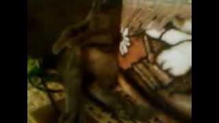 Котенок прослезился от песни Ю.Шатунова
