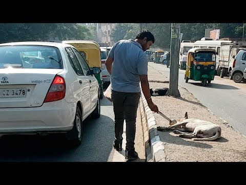 Feeding Dogs in India with Red Paws Rescue - Balanced Dog Training