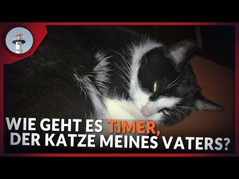 0 - Wie geht es Timer, der Katze von meinem Vater?