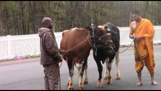 Veda Sammelanam - 2016, SVBF, Stroudsburg - Procession and Go Puja