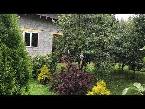 Моя любимая Дача 12 июля 2019 г. Обзор сада после дождя. Все растёт, не смотря на холод! 🌹🌹🌹