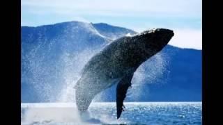 Самый большой кит в мире   синий кит