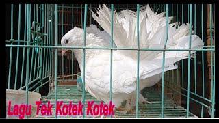 Lagu Tek Kotek Kotek - Lagu Anak Indonesia