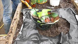 How To Grow Tomatoes In Hanging Baskets And Containers