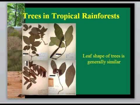 BIOL3465 Biotic Characteristics Tropical Forests Lecture 7
