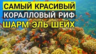 Самыи крутой риф в Шарм эль шейхе Отдых в Египте ЛУЧШИЙ КОРАЛЛОВЫЙ РИФ В ЕГИПТЕ