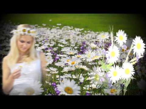 Ромашки - Растения и цветы