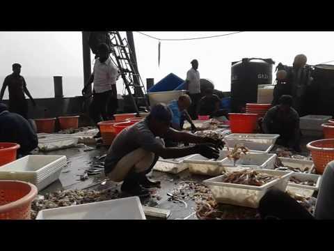বঙ্গোপসাগর থেকে এসব কি তোলা হচ্ছে দেখেন একবার | Bangladesh Marine Fishing Adventure