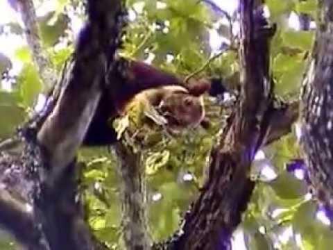 Wayanad Wildlife Sanctuary Kerala Tour