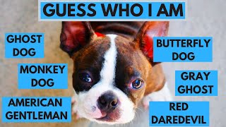 15 Dog Breeds With Interesting Nicknames  Dog Breed Quiz