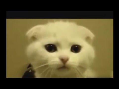 فيديو قطط مجنونة تموت بضحك - Video crazy cats die of laughter