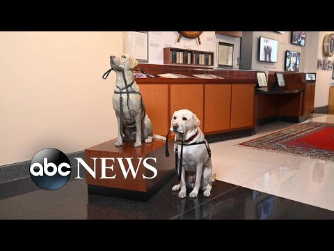 America Strong: Sully the Dog gets a statue