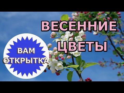 Открытки Весна с поздравлениями