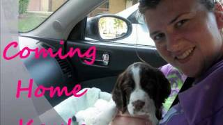 Bringing Home Our English Springer Spaniel Puppy