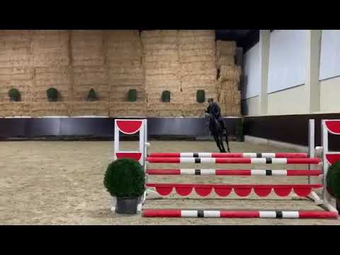 Showjumper Holsteine Gelding 5yrs