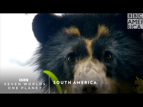 South America | Seven Worlds, One Planet | Saturday, February 1 at 9pm | BBC America