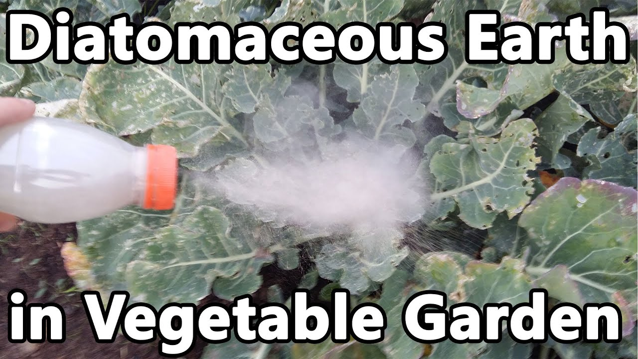 Diatomaceous earth in the garden - Using Diatomaceous Earth Against Caterpillars In Vegetable Garden
