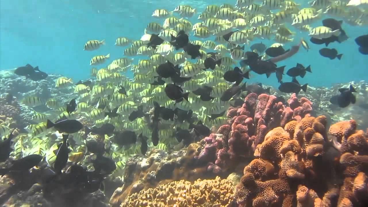 Diving at Flying Fish Cove, Christmas Island - March 2012 - YouTube