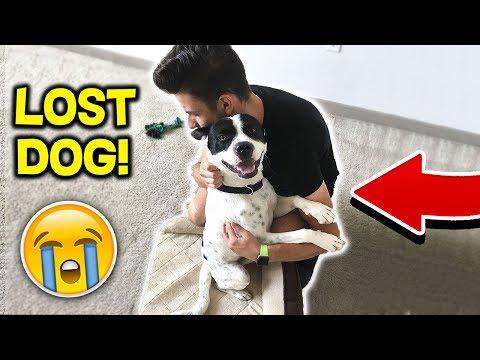 I found a LOST DOG! 🐶 (Emotional)