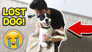 I FOUND a LOST ABANDONED DOG! 🐶 Can We HELP Him? (Emotional Animal Video)