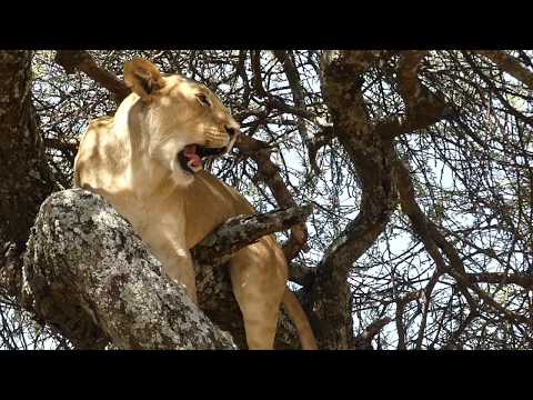 60 Second Travel in Tanzania - The Serengeti