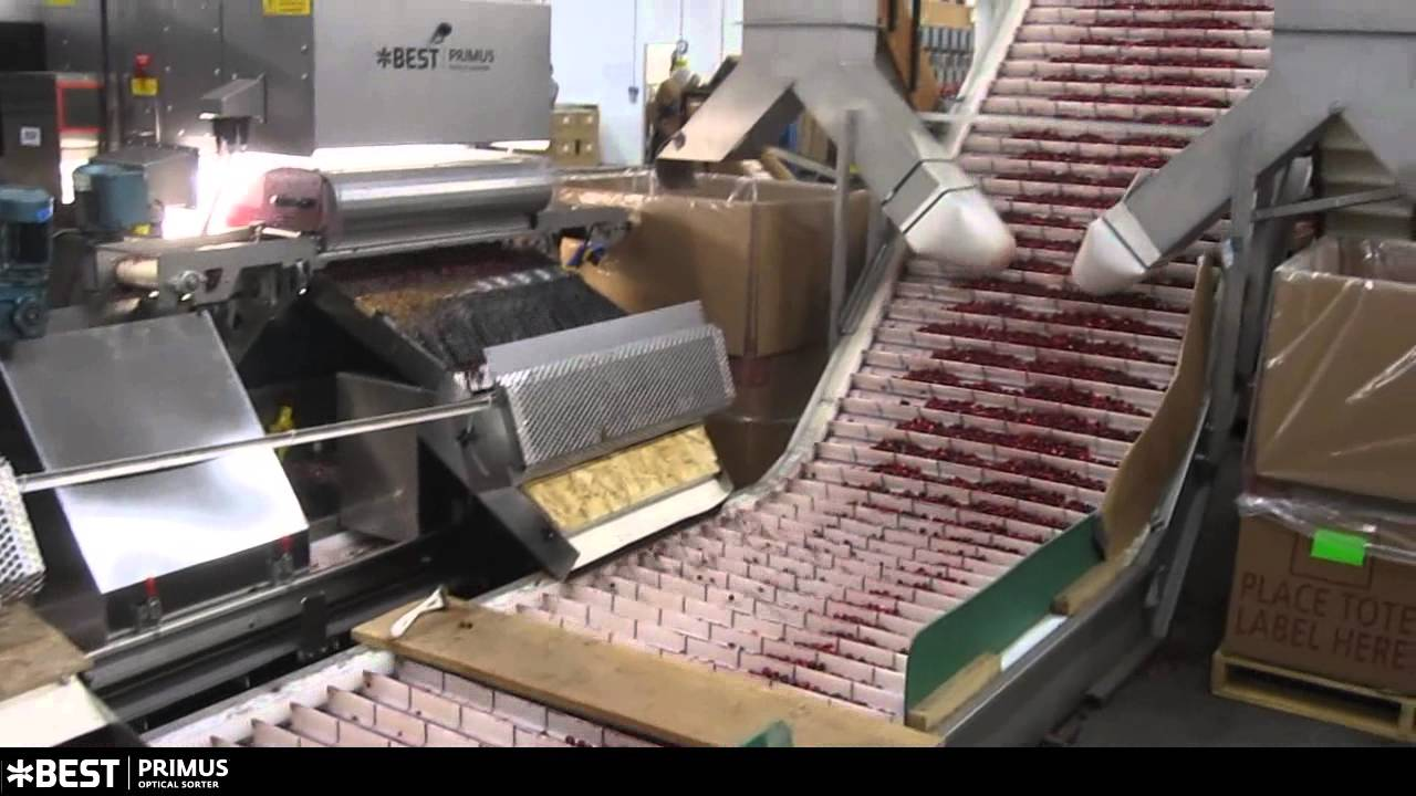 Cranberry sorter Primus - TOMRA Sorting