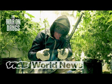 How Super-Strength Weed Dominated the UK   The War on Drugs