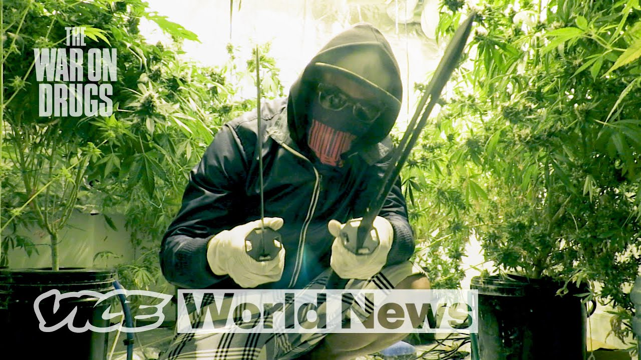 How Super-Strength Weed Dominated the UK | The War on Drugs