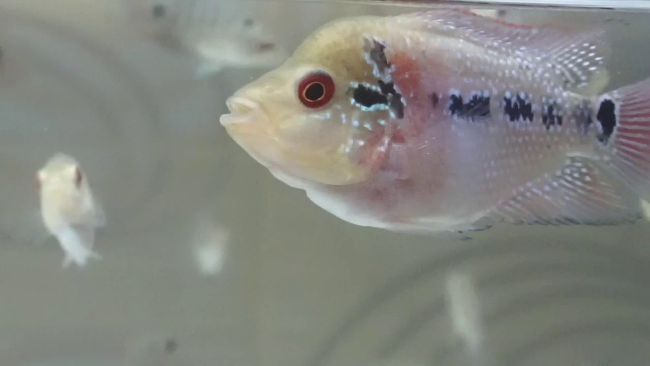 Ukuran Aquarium Louhan Anakan Kumpulan Materi Pelajaran Dan Contoh Soal 3