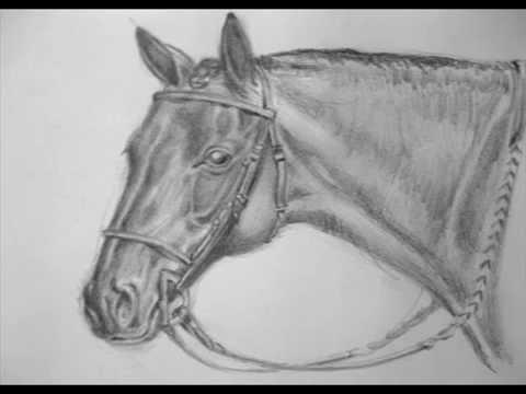 Cómo aprender a dibujar caballos - Método Schwatz . - YouTube