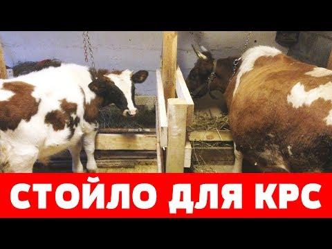 Стойло для коровы своими руками
