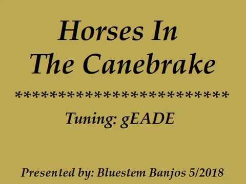 Horses In The Canebrake