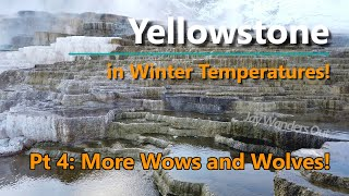 Yellowstone in Winter Temperatures Part 4 - Wows and Wolves