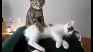 КоТский массаж - 2015 [Коты массажисты - 2015]