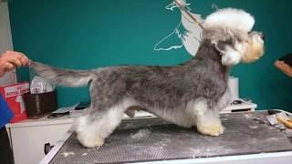 Dandie Dinmont Terrier #dandiedinmont
