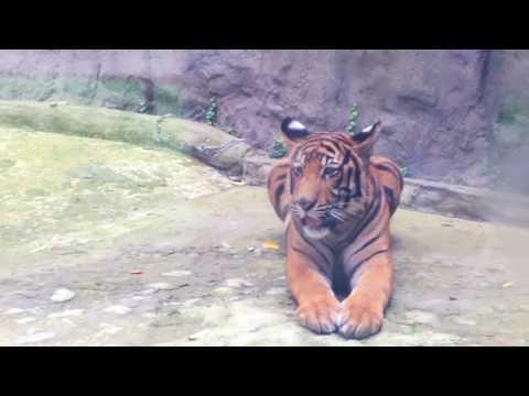 Một vòng quanh vườn thú - Saigon Zoo 2016 (Phần 2)