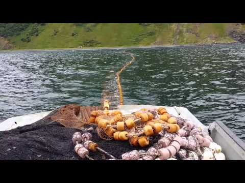 Alaska Commercial Salmon Fishing Purse Seine FV Outfox Skifman Rex