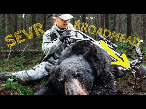 Chinese Lady Shoots 1st Black Bear Close Range with a Crossbow! Spring Bear Manitoba (2021)