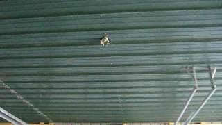050510a Keener Metal Ceiling - Completed Job
